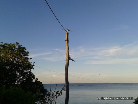 jamaica_beach_house_little_bay_cabins_bird_singing