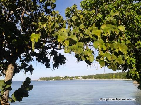 jamaica_beach_house_little_bay_cabins_sea_grapes