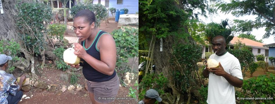 jamaica_beach_house_little_bay_cabins_drinking_coconut