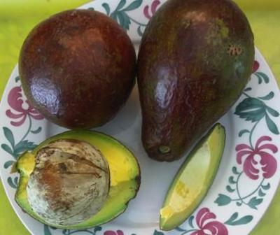jamaican pear from grandma's tree