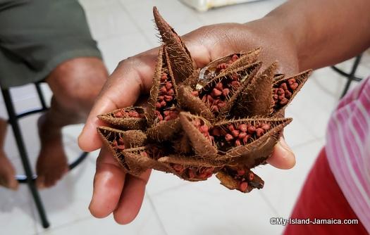 jamaican annatto pods