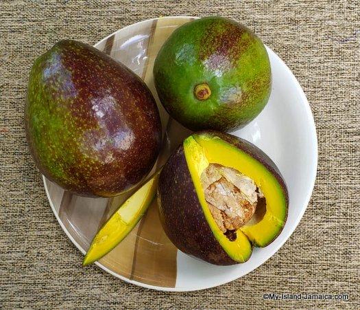 jamaican avocado