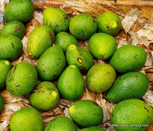 Jamaican Avocado in the Charles Gordon Market, during a raining day