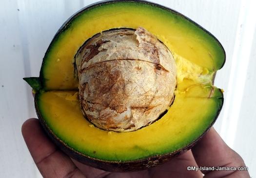 Jamaican Avocado Benefits