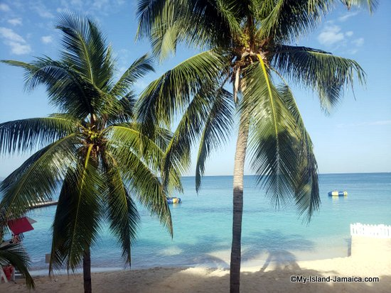 jamaican_beach_coconut_trees_doctors_cave