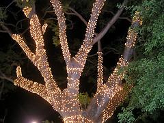 jamaican christmas lights