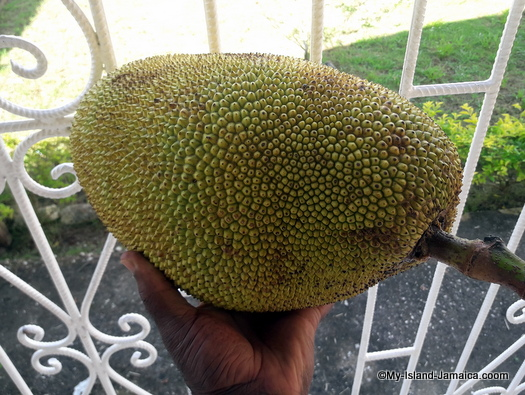 jamaican_fruits_jackfruit