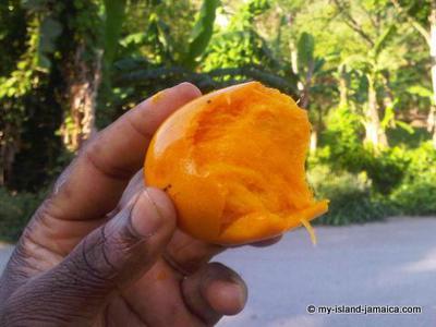 Enjoying a juicy Jamaican Mango - The 'Stringy'