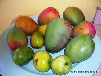 Types of Jamaican Mangoes