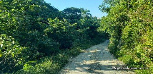 rastafari_indigenous_village_journey_in
