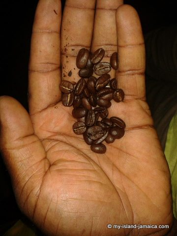 real_jamaican_coffee_beans