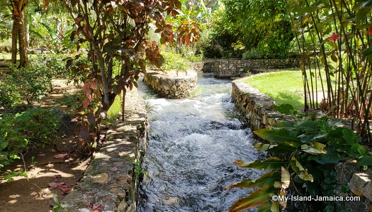 The stream flowing at Roaring River Attraction in Westmoreland Jamaica