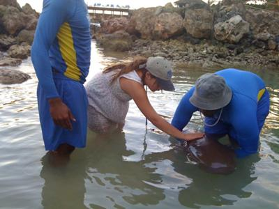 petting a 9 ft. nurse shark, behind the scenes!