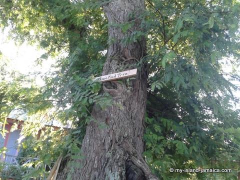 tamerind_tree_jamaica_beach_house_little_bay_cabins