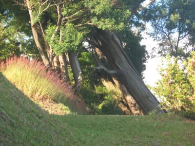 The Tilted Tree at Cinchona